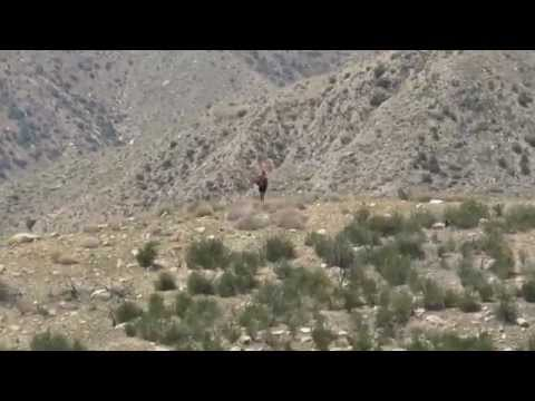 Putting It All Into Perspective Above The Whitewater River, California | PCT 2014