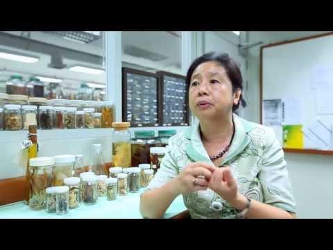 เล็กๆเปลี่ยนโลก [by Mahidol] ยาเขียว ยาขม สรรพคุณสมุนไพรไทย (3/3)