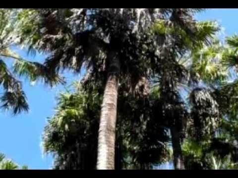 Pacific Palms.wmv