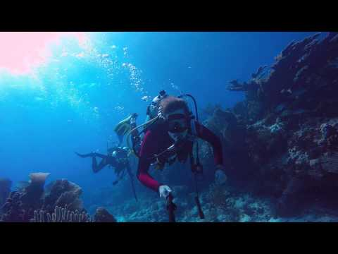 Molasses Reef : The Ultimate Selfie