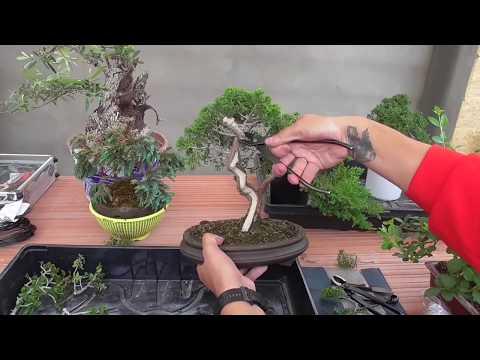 Taller bonsai 4 de mayo de 2019