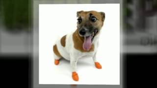 Pet Supplies Store Wholepetdirect.com Pawz Dog Boots Now Available!