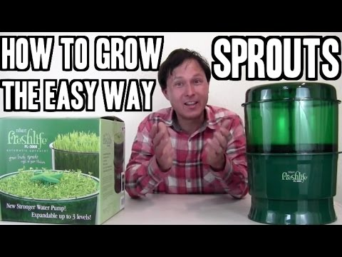 How to Grow Sprouts the Easy Way