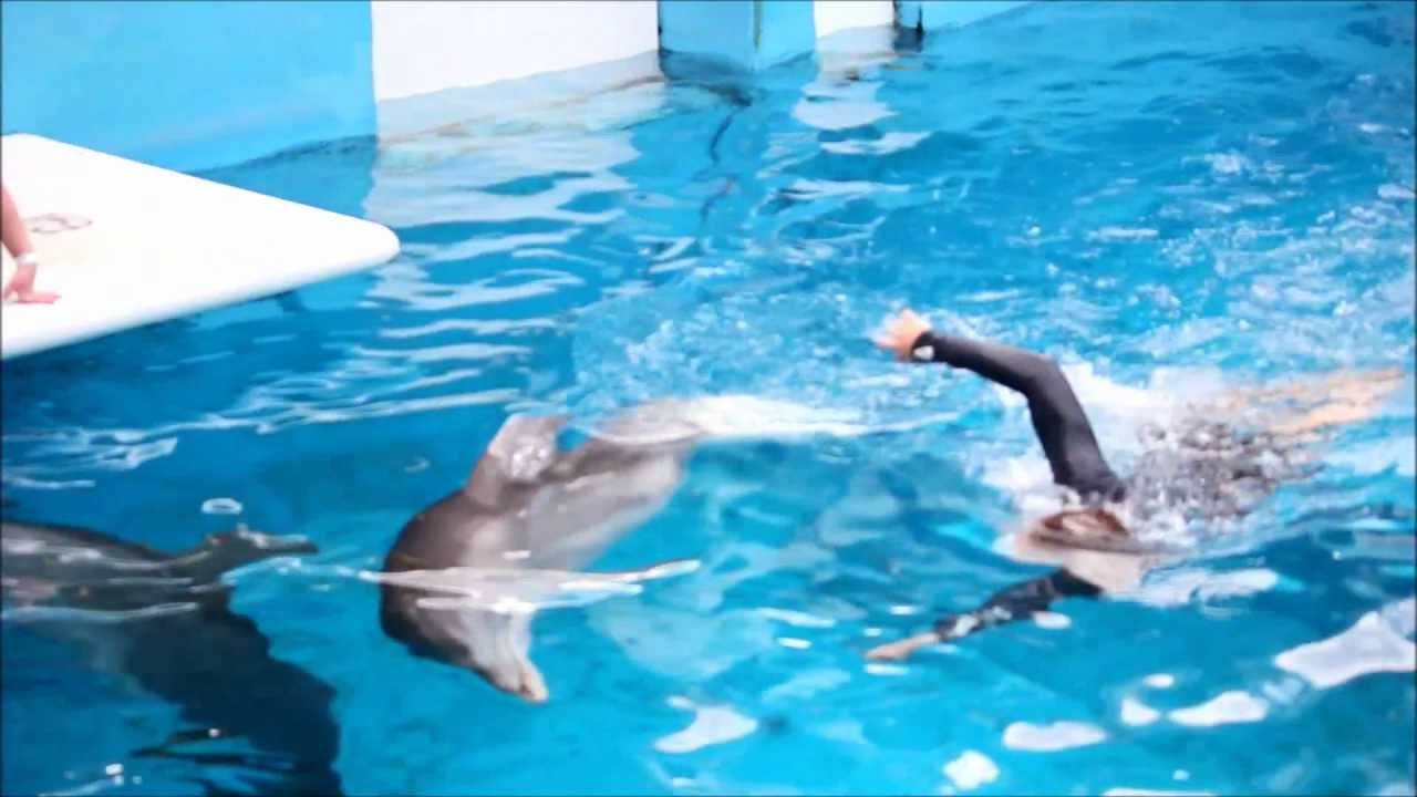 Winter The Dolphin Swimming With Her Prosthetic Tail Youtube