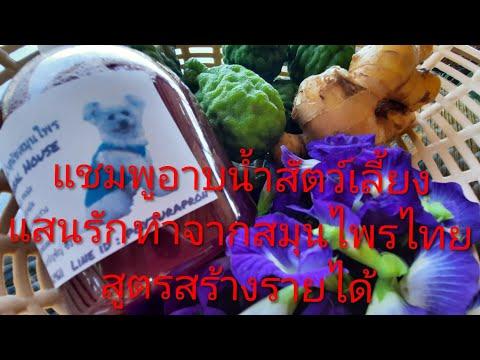 แชมพูสุนัขสมุนไพร แชมพูสมุนไพร D.I.Y แชมพูสุนัขและแมวจากสมุนไพรไทยทำอย่างไรมาดูกัน