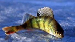 США. Зимняя рыбалка.(Этот канал о нашей жизни в США: о быте, путешествиях, развлечениях, покупках и т.п. Обо всем, что происходит..., 2014-02-16T02:19:50.000Z)
