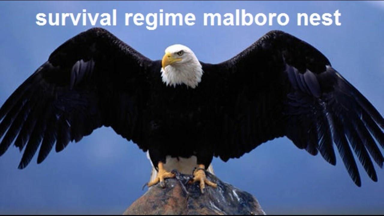 Download Eiye Jojo Malboro Nest Surviver Regime