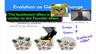 Chapter 17 Part 5 - Genetic Drift & the Founder Effect