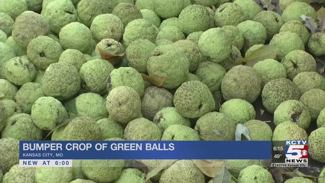 KC residents react to names of the big bumpy green fruit ...