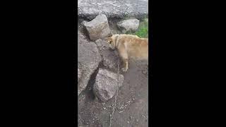 Рыжая собака убила кусочек хлеба