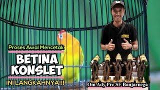 Download lagu Betina Konslet : PEMBUKTIAN!! ini Proses awal MENUJU lovebird BETINA KONSLET