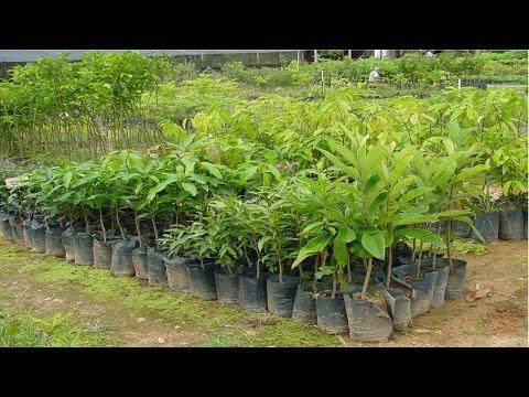 Curso Como Produzir Mudas Arbóreas de Valor Comercial - Produção, Coleta e Beneficiamento de Sementes - Cursos CPT