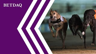 How to win the best greyhound odds in Dublin 2019   Top guide for best greyhounds online