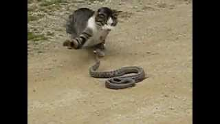 cat vs snake video clip funny and amazing videos joy 4all