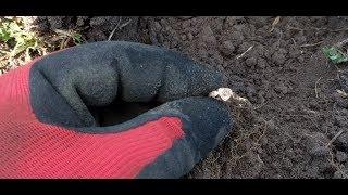 Поиск золота на пляже озера онтарио коп 2016 - video izle - .