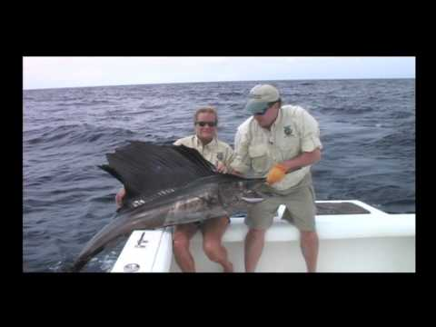 Wildside Adventures Travel Service - Panama Deep Sea Fishing Sailfish