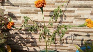 गमले में पौधे लगाने के बाद सूख क्यों जाते हैं,anvesha,s creativity