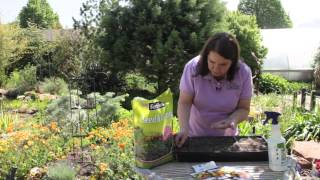 Directions for Planting Marigold Seeds : Grow Guru