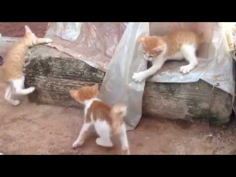 Kittens playing very funny