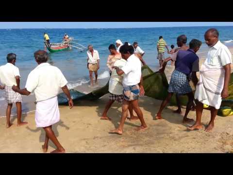 SRILANKA KALMUNAI Fishing ( கரை வலை மீன்)