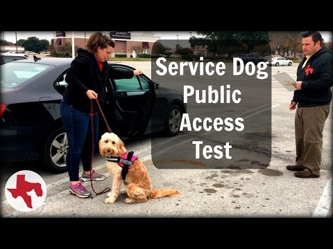 Service Dog Public Access Test