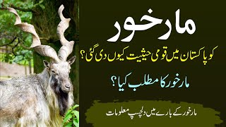 Knowledge about Markhor national animal of Pakistan | markhor meaning in urdu