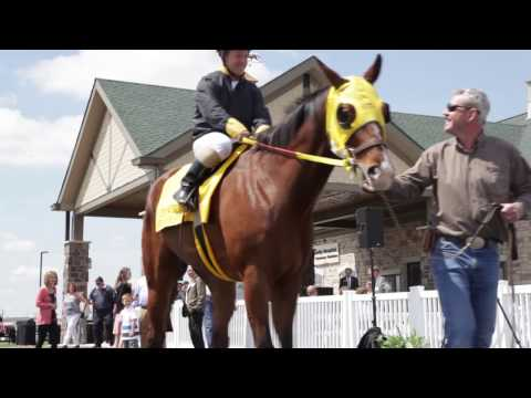 Centaur Equine Specialty Hospital Grand Opening