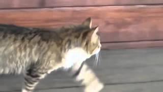 Улыбнись  смешные видео про кошек !