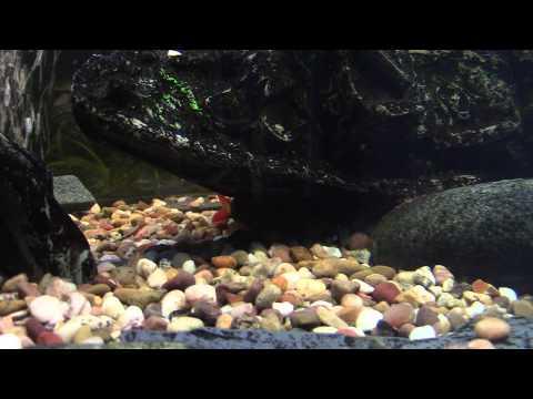 Tropical Fish Keeping Hobby