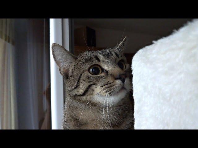 Kitten's eye pupils get excited!