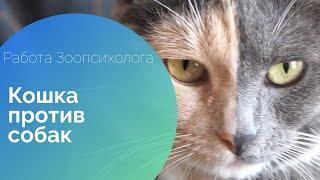 РАБОТА ЗООПСИХОЛОГА - Кошка против собак: как примирить \
