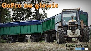 Mokre żniwa, wtopy & transport zboża ☆ GoPro na głowie #8 - Żniwa 2016 w GR Mokrzyn... ㋡