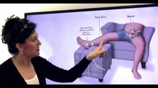 Мышцы тазового дна - Мужчины