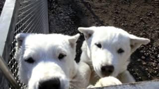 第三熊野系、湘南の哲直系の仔犬(三ヶ月)