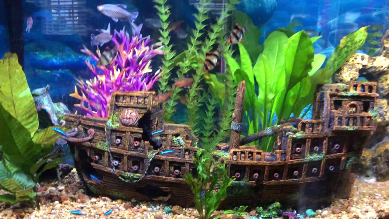Phil S Pirate Ship Fish Tank Aquarium Youtube