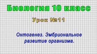 Биология 10 класс (Урок№11 - Онтогенез. Эмбриональное развитие организма.)