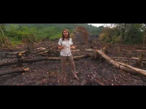 Ecochick Adventures: The Trans Borneo Challenge documentary trailer