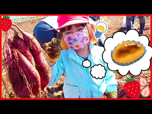 こはるちゃんが初めての芋ほりだよ♡ 簡単スイートポテト美味しくできるかな? お出かけ おままごと お菓子作り 秋 4歳