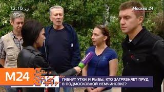 Жители подмосковной Немчиновки жалуются на загрязнение пруда - Москва 24