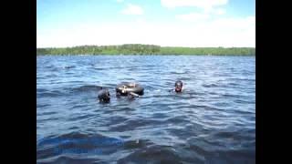 духи добавляют подводная охота в десногорске выбрать туалетную
