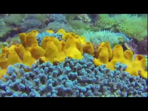 Alor is one of best places for diving in Indonesia