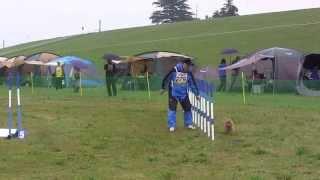 完走した犬の中でブービー賞でした(^-^; スラロームで1ミスってます。