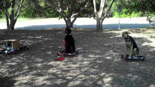 Distance Stays At Group Class Austin Dog Training