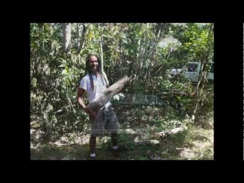 Growing Shiitake Mushrooms in Jamaica ( Part 2 ).wmv