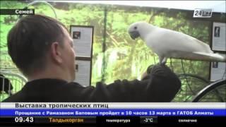 В Семее открылась выставка тропических птиц
