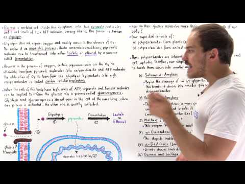 Introduction to Glucose Metabolism