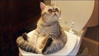 Коты 2019 Приколы с Котами и Другими Животными#2 -Смешные коты-Funny Cats