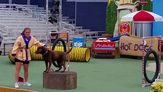 Pets Rule full show at SeaWorld