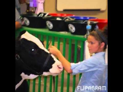 Whitley County 4H 2014