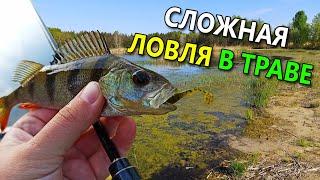 АКТИВНАЯ ПРИМАНКА НА ОКУНЯ 1 СЛОЖНАЯ ЛОВЛЯ В ТРАВЕ Рыбалка на окуня 2020 Ловля окуня весной